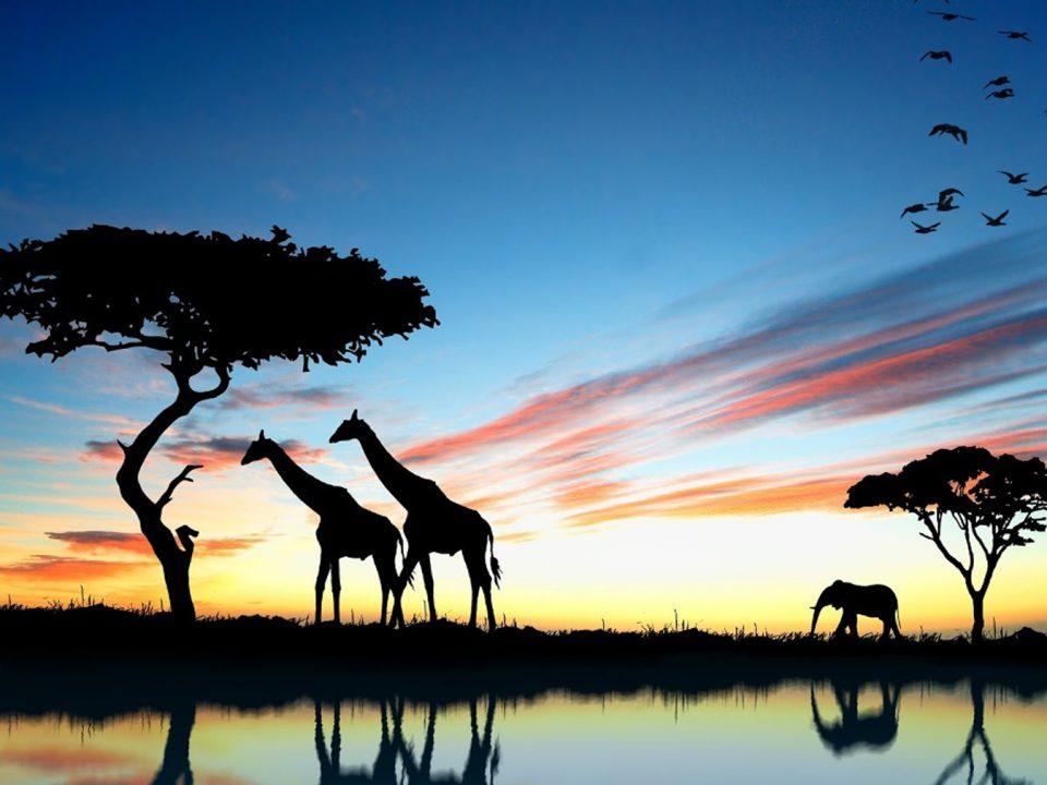 Safari - AF